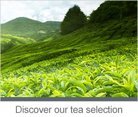 Discover our tea selection